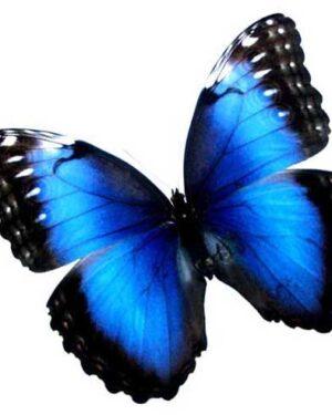 """Online Workshop Pakket """"Vlinder"""""""